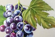 grapes-painting-detail