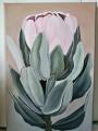 rosa-leucadendron