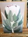 rosa-leucadendron3